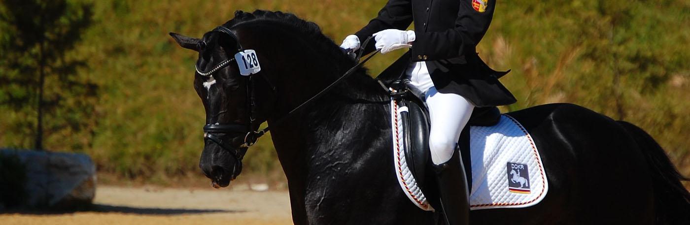 Ponys für Zucht und Sport!